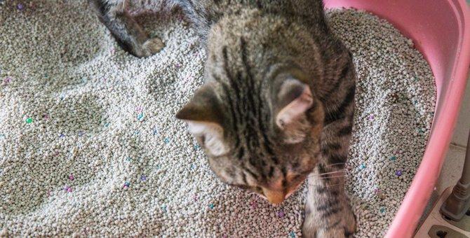 猫がトイレの砂をかけないのはどうして?4つの対処法