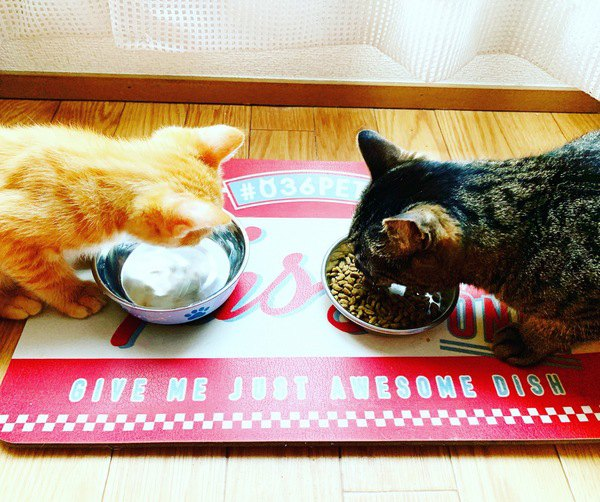 愛猫が長生きする食生活とは?意識すべきポイント5つ