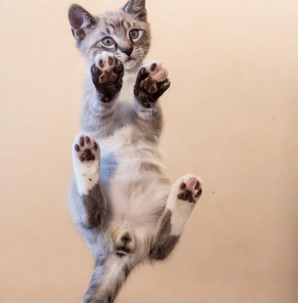 「にゃんたま」のかわいすぎる写真10選!おすすめの人気グッズ情報