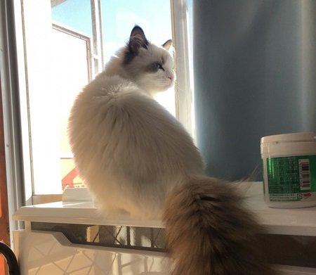 猫がボーッとしてる時に考えてる5つの事