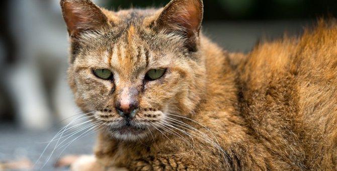サビ猫が賢い理由とその魅力