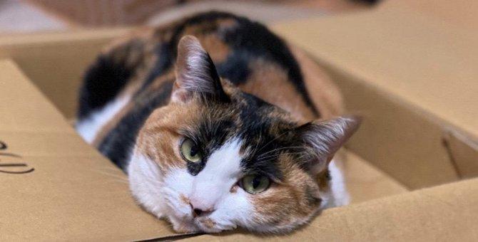 猫が喜ぶ『手作りおもちゃ』3選!