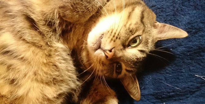 被災した保護猫がくれたもの。笑顔と癒し
