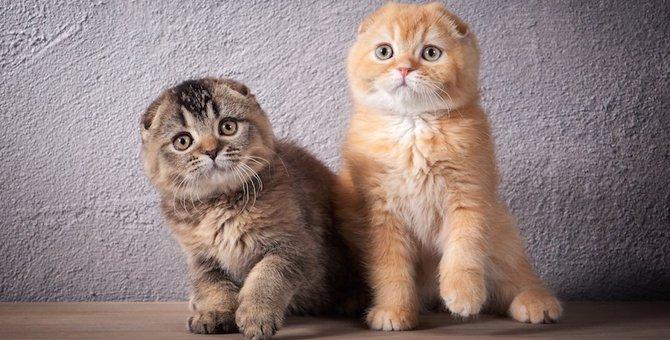 くみっきーの猫がかわいい!種類と特徴