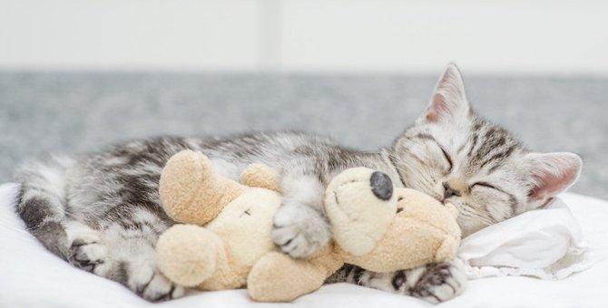 猫の夜泣き対策8選!原因やおすすめグッズ