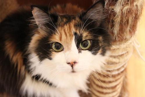 猫の箱とは 大阪の猫カフェの楽しみ方