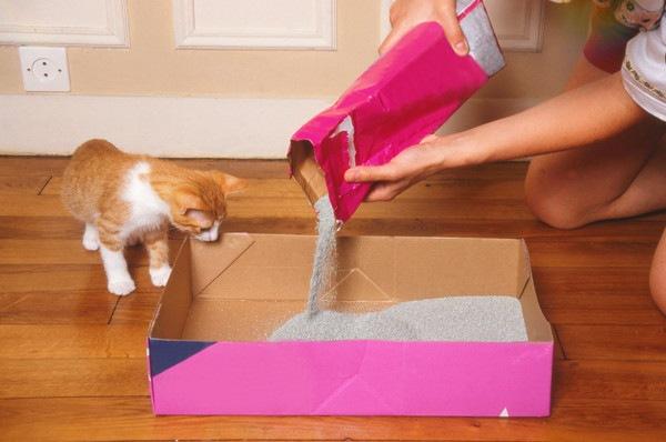 猫のおしっこをしつける7つの方法