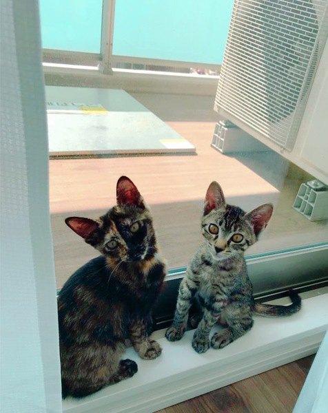 猫に最適な『室温』とは?年齢別の快適温度をチェック!