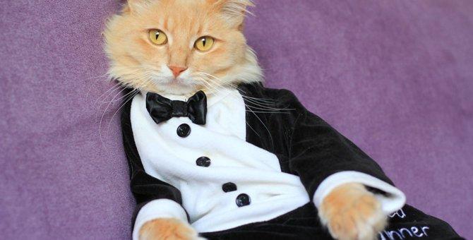 猫も着られるスーツ4選!かっこよくダンディーに変身しちゃおう