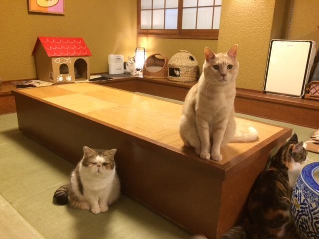 日本で初めての猫カフェ「猫の時間」北本店に行ってみよう!