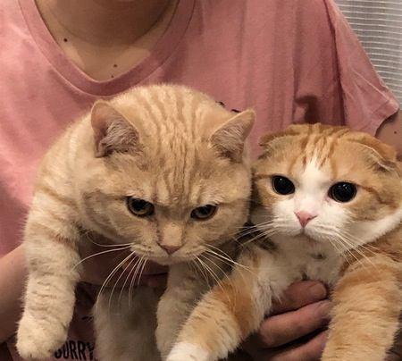 猫が闘争心を燃やすもの5選