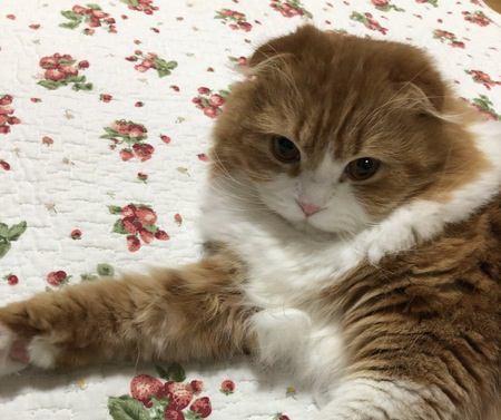 「ほっといてにゃ!」猫に近づいてはいけないタイミング6つ