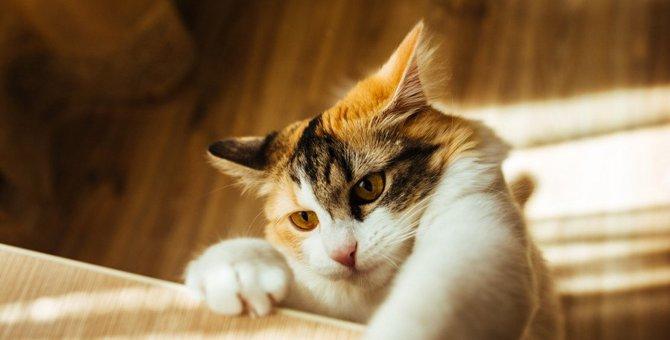 猫がジャンプを失敗しちゃうのはなぜ?