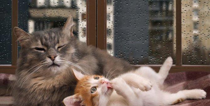 『猫が顔を洗うと雨が降る』って本当?その理由を徹底検証