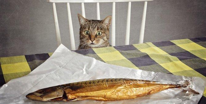猫は魚が好きなのは間違い?どうして食べるようになったの?