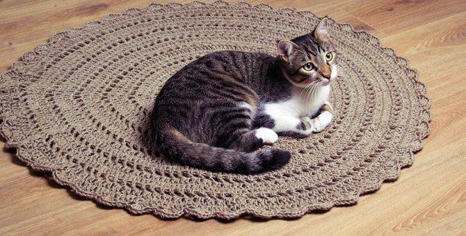 新しいシーツに絨毯…どうして猫は新しい敷物が好き?5つの理由