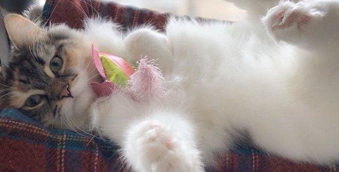 猫が好きな人だけにしか見せない特別な仕草5つ