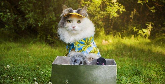 猫をキャンプに連れて行くときの注意点と準備しておく物