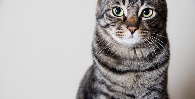 猫を幻滅させる飼い主の『自分勝手な行動』4つ