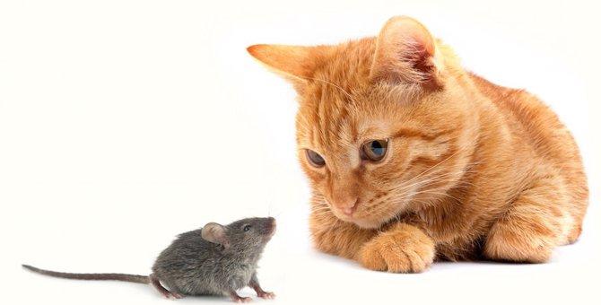 どうして猫はネズミを捕まえるの?