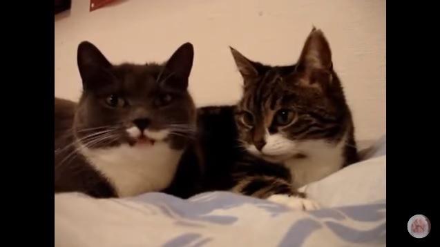 【ニャウリンガルさえあれば…!】猫達の会話内容がすごく気になる!