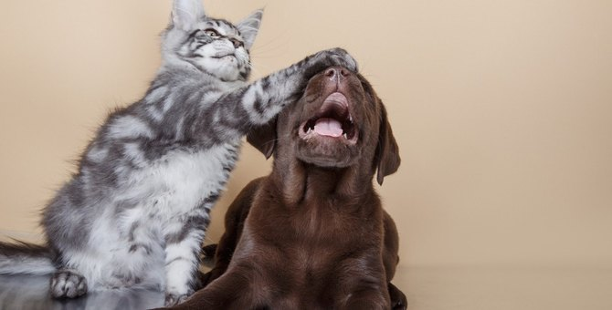 猫を『情緒不安定』にする飼い主のトラブル行為6つ