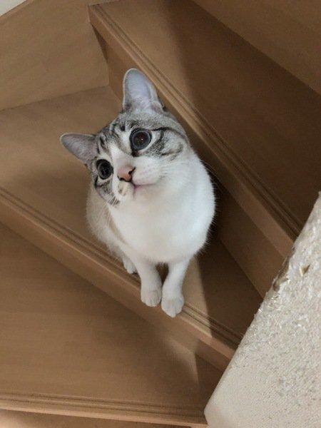 猫に信頼されてるかわかる9つのチェックリスト