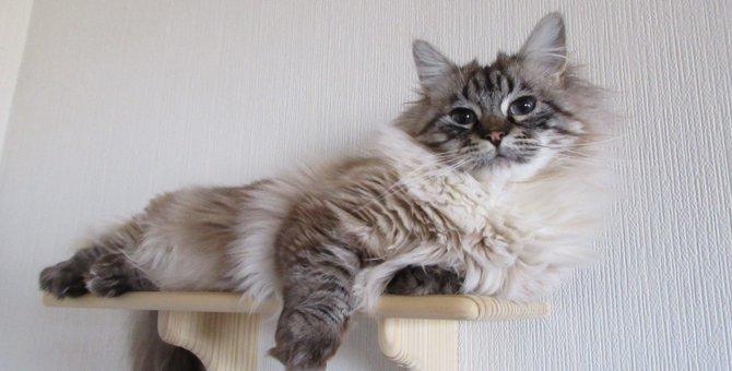 愛猫ちゃんが喜ぶ!手作りキャットウォーク