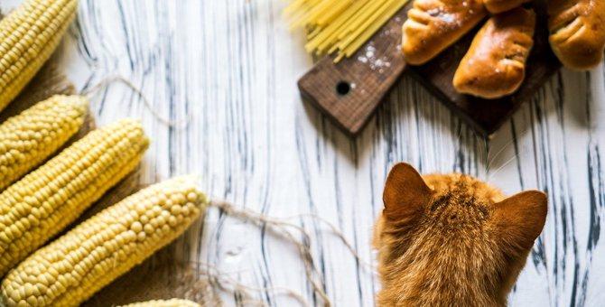 猫が『消化不良』を起こしやすい危険食材3選