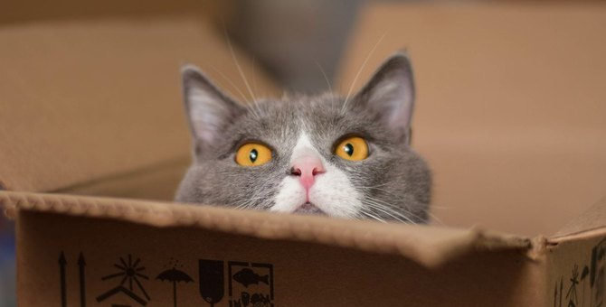 災害に備えよう!猫との『同行避難』で普段から心がけておくこと6つ