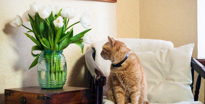 猫がストレスを感じない環境づくりをしよう!
