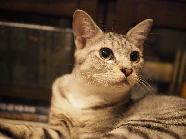猫が決まった時間に行動する理由4つ