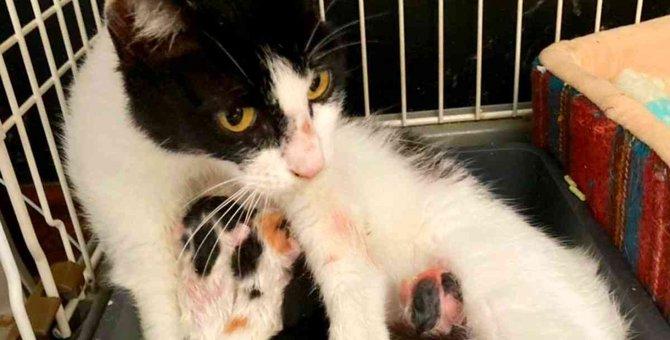 妊娠中のママ猫を保護…子猫たちの命の期限に奇跡の展開が!