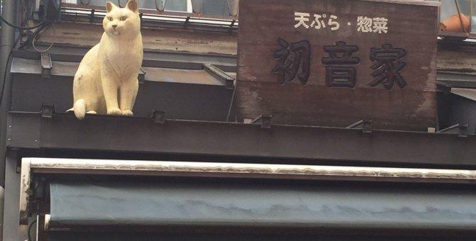 猫の町『谷根千」へ!住民より住猫が多い?!下町風情溢れる街のみどころ