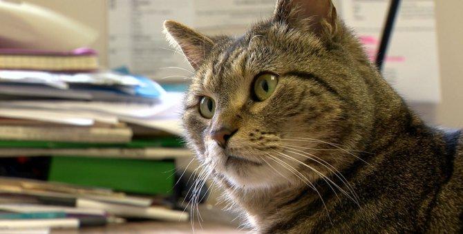 カリフォルニアで行方不明になった猫が4年後にカナダで発見!
