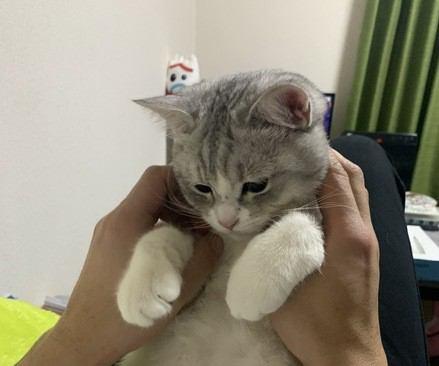 猫が肩や膝に『ちょこんと乗る』5つの心理
