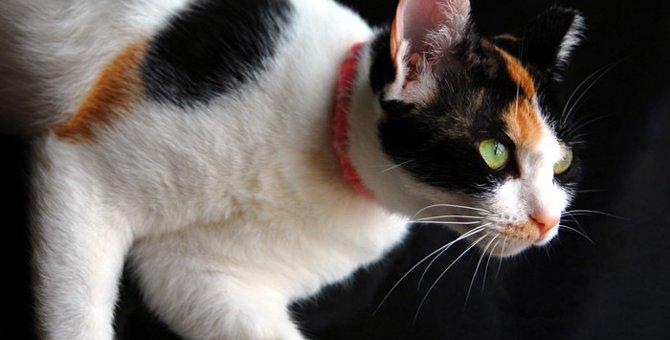 猫の霊感・迷信・本当にあった不思議な話