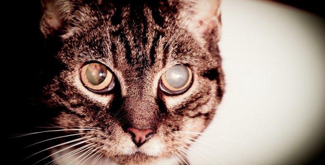 猫が白内障になる5つの原因と症状とは