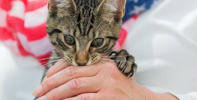 飼い猫が噛みついてきた時にやるべきではないNG行為4選