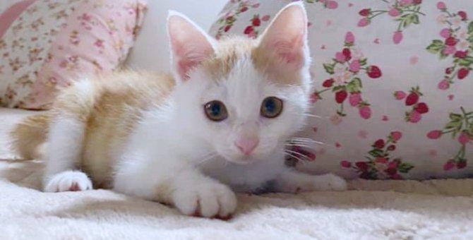 交通事故死した子猫が起こした奇跡の出会い