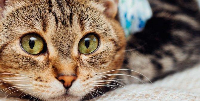 猫の不妊手術(避妊・去勢手術)費用や助成金、受けさせるメリット・デメリットまで