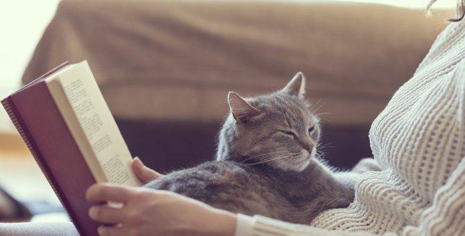 猫の気持ちを鷲づかみ!飼い主がとるべき行動7つ