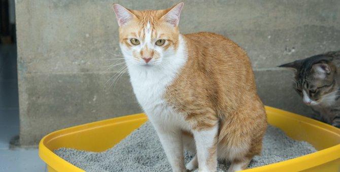 猫が一日に何度もトイレに行く理由3つ!深刻な病気が隠れているのかも…