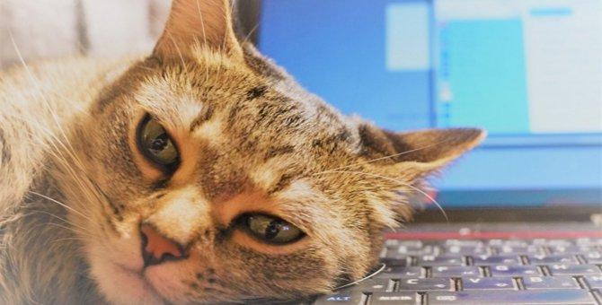 LAYLAの12猫占い【5/25〜5/31】のあなたと猫ちゃんの運勢
