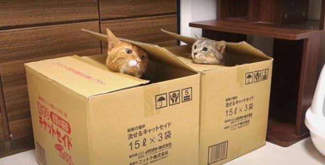 シンクロ!同時にひょっこり顔を出す猫ちゃんが可愛すぎる♡