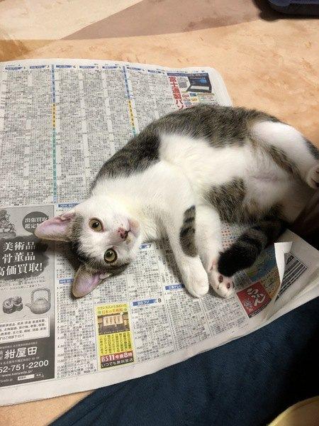 猫が新聞紙にダイブする6つの理由