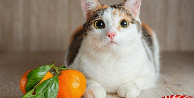 猫に柑橘類を絶対に与えてはいけない『3つのワケ』