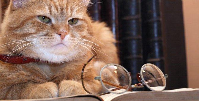 なぜ?猫を題材にしたお伽噺(おとぎばなし)が少ない理由