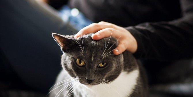 猫とのスキンシップでやってはいけないこと5つ
