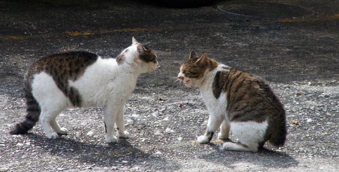 猫が威嚇している時の鳴き声や仕草、心理